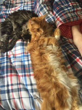 Cats on Kierans a new double bed